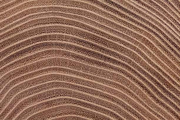 letokruhy akacie